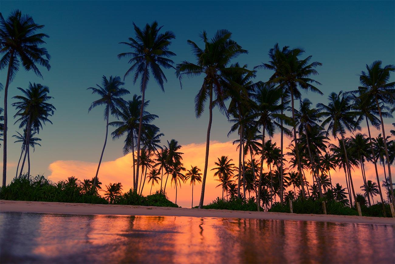 Туры на пляж с пальмами