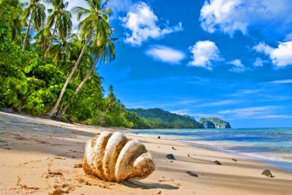 Пляж море ракушка и пальмы