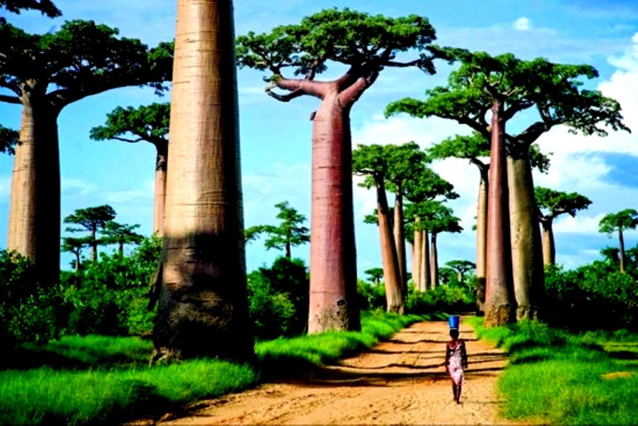 Купить тур на Мадагаскар онлайн